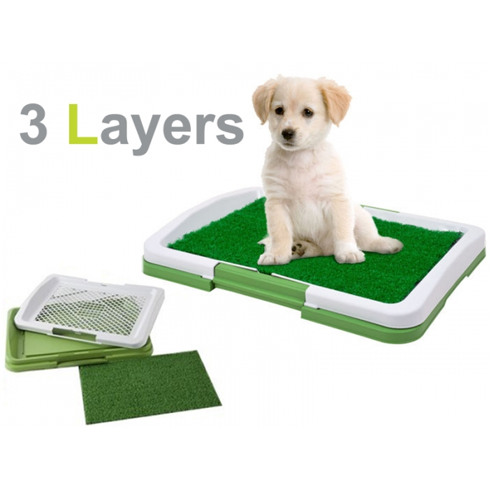 Dog Potty Training Pads Problem Toilet My Train Bell Door Led Leash Reviews Review