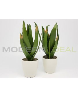 Cactus Set G - 2pc